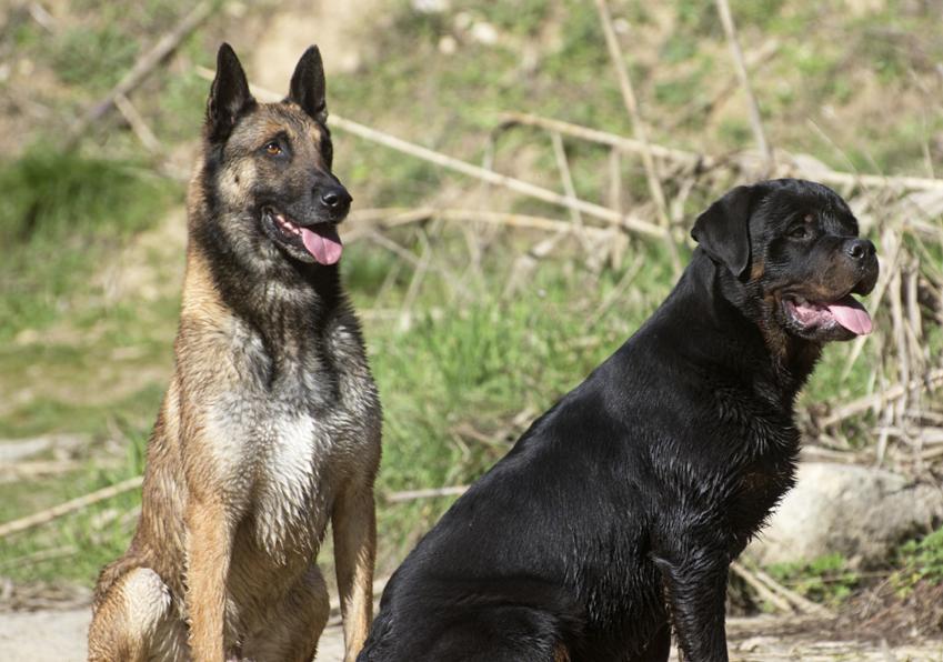 socializzazione-tra-cani