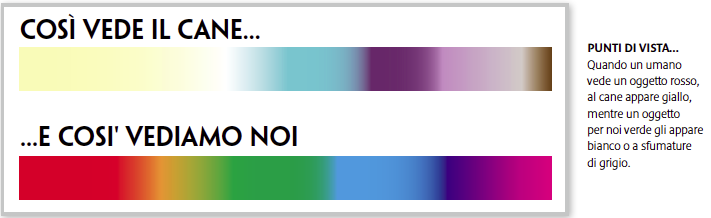 i colori del benessere | quattro zampe - Colori Camera Da Letto Cromoterapia