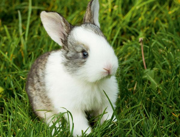 La corretta alimentazione del coniglio quattro zampe for Piccoli piani domestici vittoriani