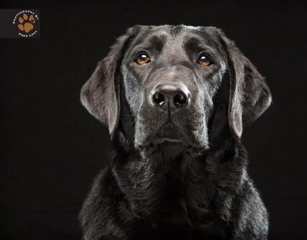 Foto Black Dog Project