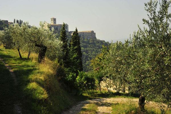 Bosco-San-Francesco,-Assisi-(PG)-©-Foto-Maja-Galli