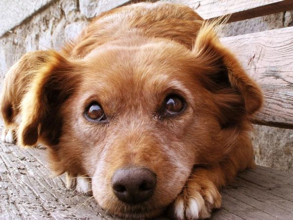 cane-che-ha-paura