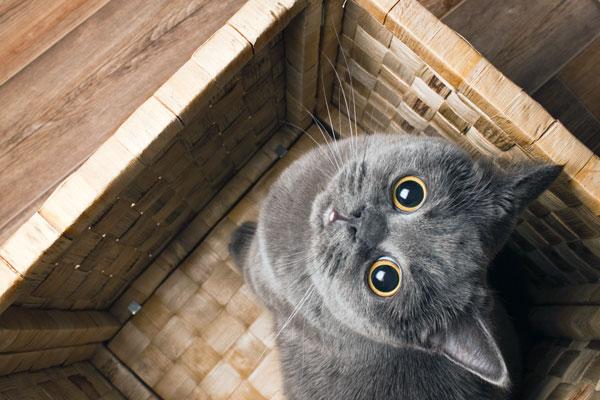 gatto-con-singhiozzo