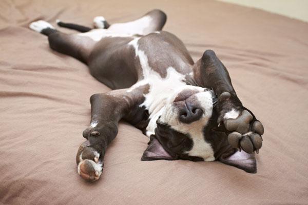cane-sale-sul-letto