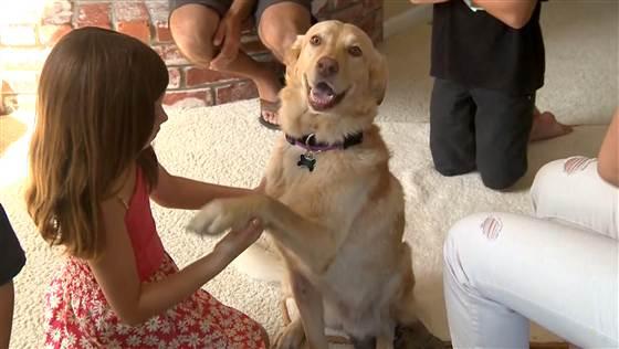 Murphy la cagnolina ritrovata dopo due anni
