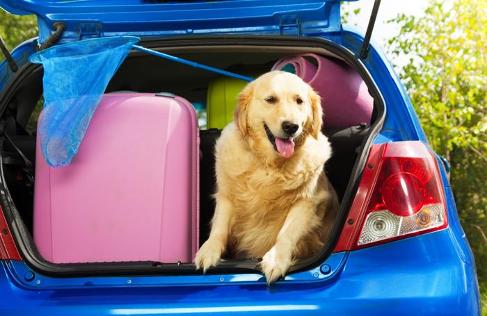In viaggio con cane e gatto