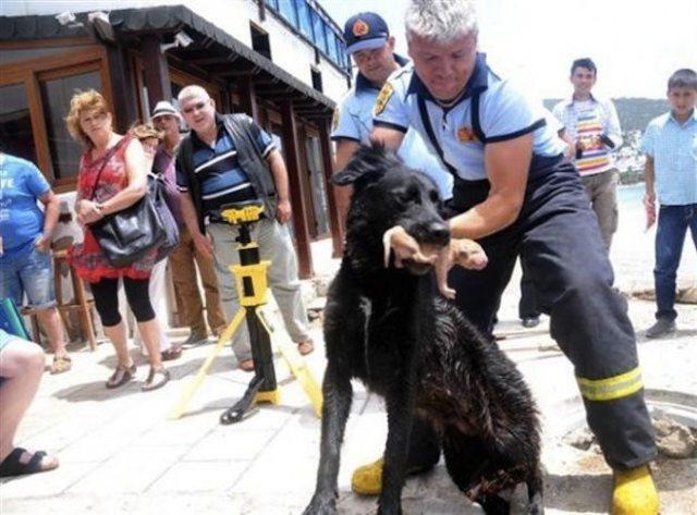 salvataggio cuccioli