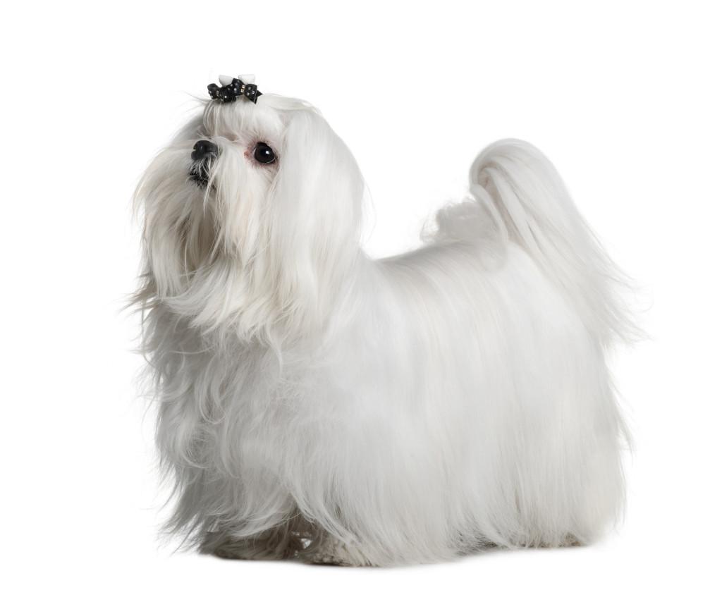 Nutrix Più Mini per i cani di piccola taglia