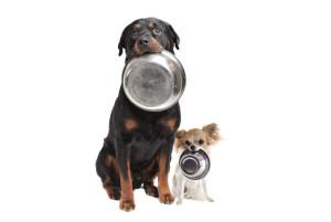 Alimentazione dei nostri cani