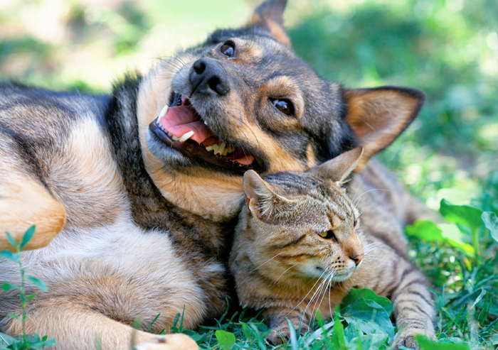 Cani e gatti in estate