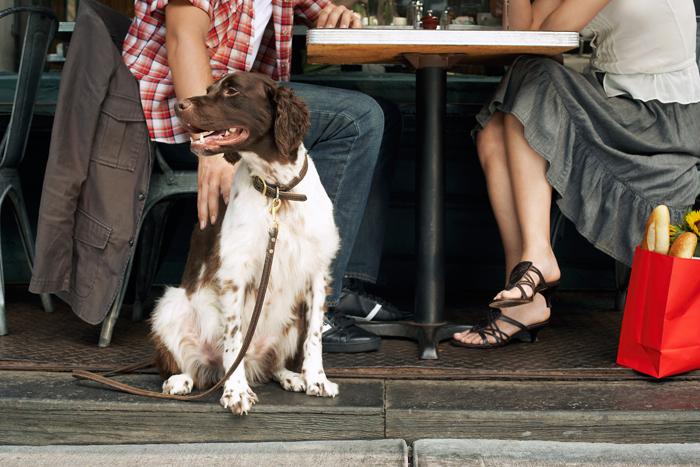 Cani nei locali pubblici