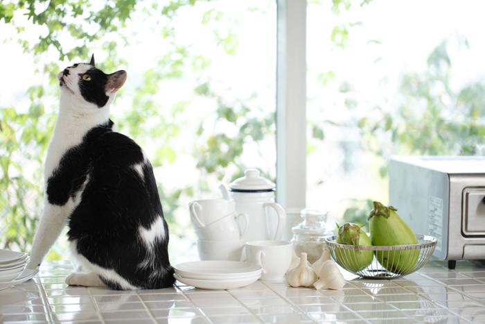 La casa perfetta per il gatto