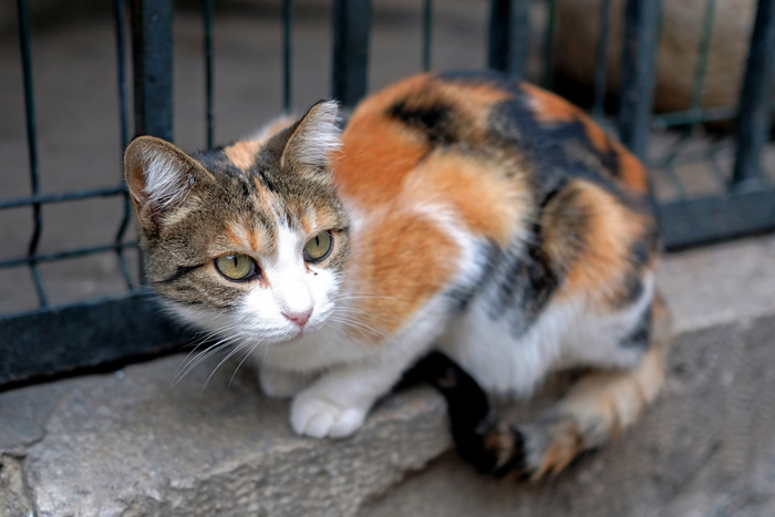 Fenomeno dei gatti abbandonati a Milano
