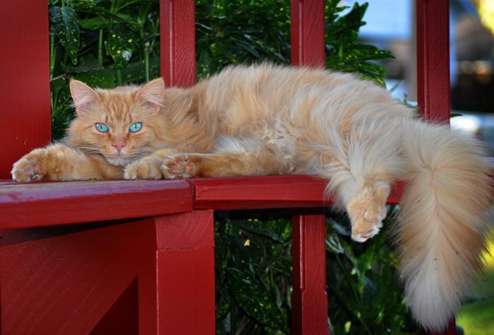 Se Il Gatto Perde Troppo Pelo Quattro Zampe