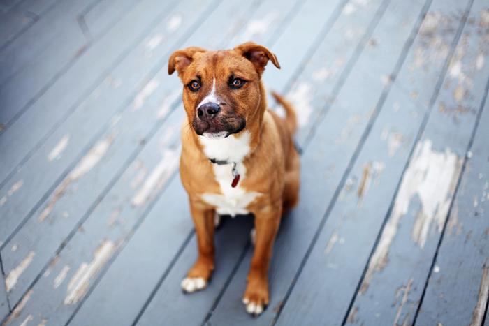 Come insegnare i comandi base al nostro cane