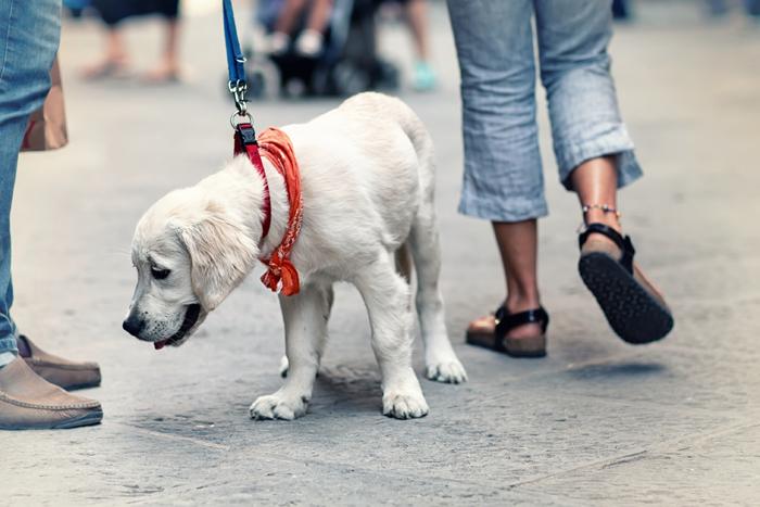 A passeggio in città con il cane