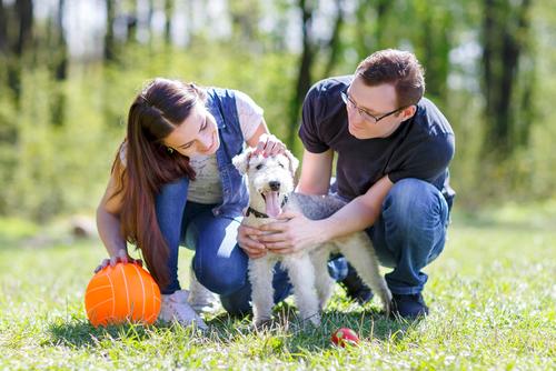 10 motivi per avere un cane