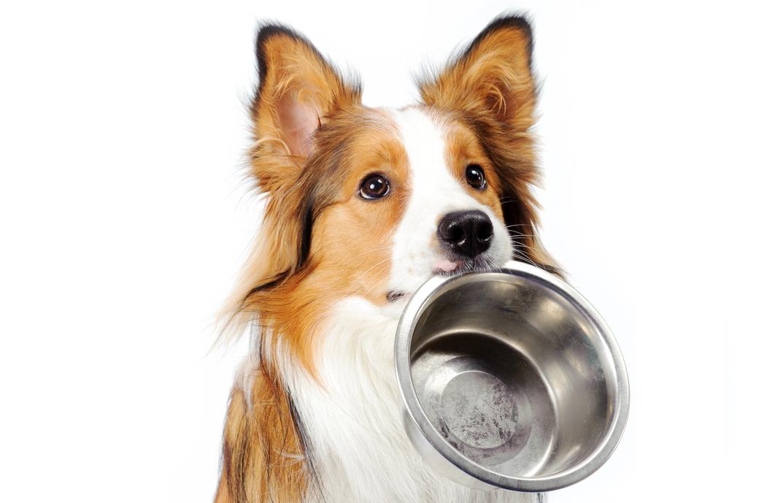Alimentazioni cani