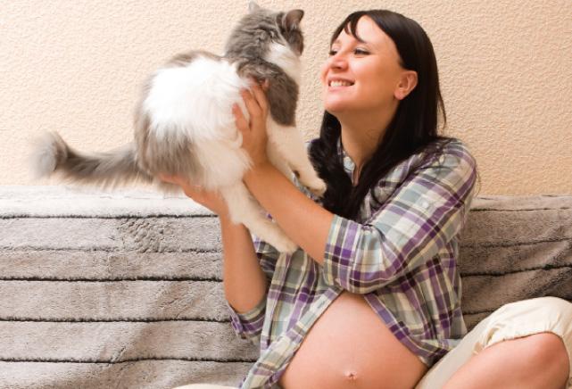 Animali e gravidanza