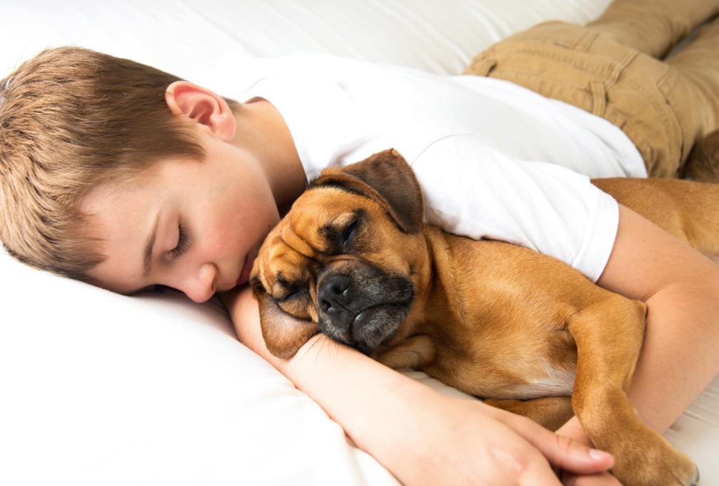 Cani e affetto