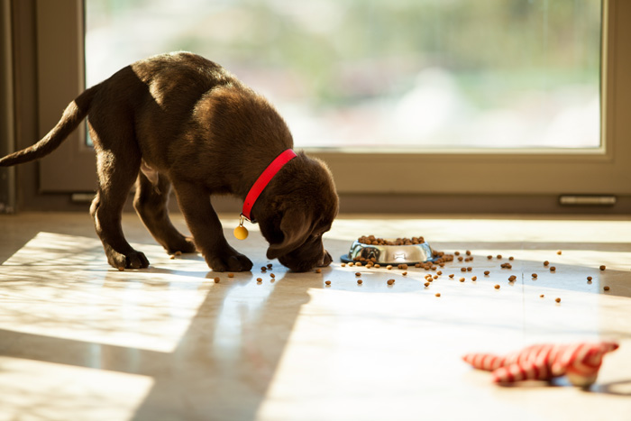 Cucciolo che mangia troppo veloce