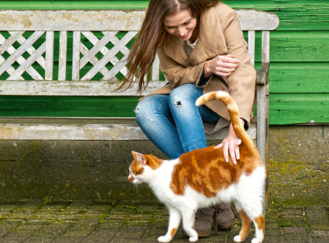 In compagnia di un gatto
