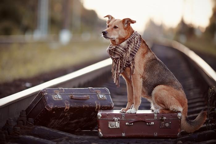 Trasloco con cane