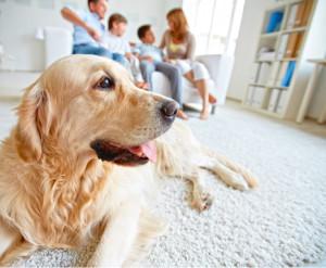 Motivi per avere un cane in famiglia