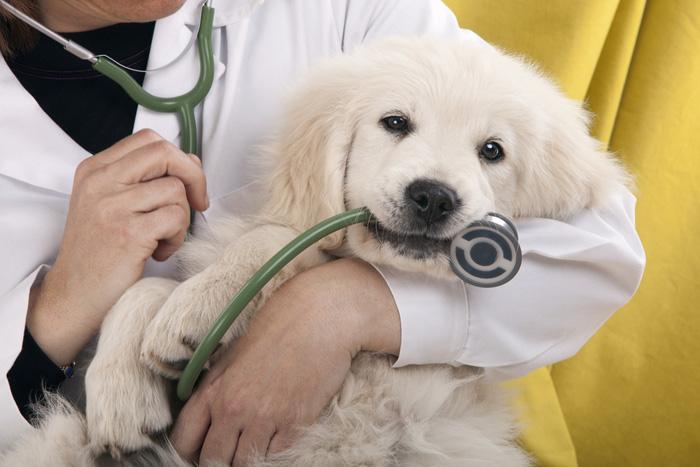 Cucciolo dal veterinario