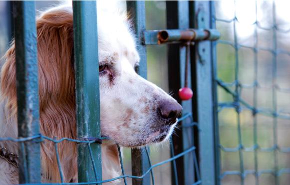 Cane di quartiere