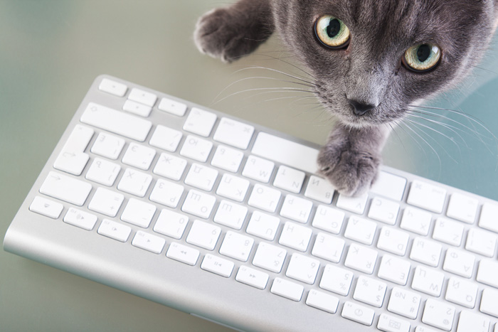 Gatti e web