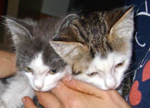 Gattini di Costanza De Palma