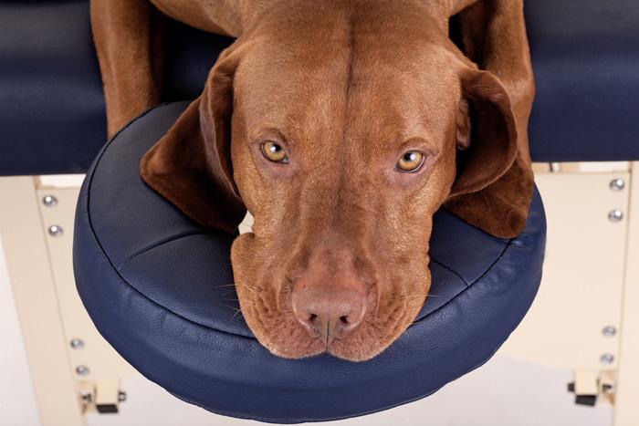 Kinesiologia per i cani