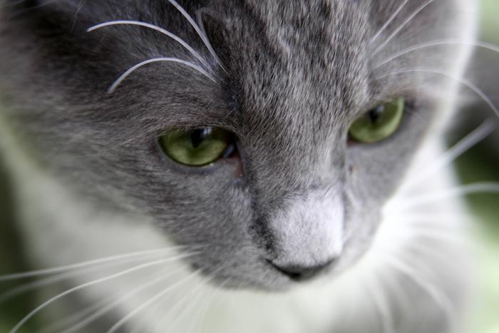 Problemi intestinali nel gatto