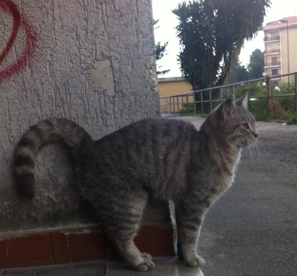 Gattina abbandonata a Napoli