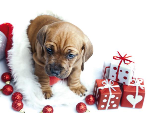 I regali di Natale per il nostro cane