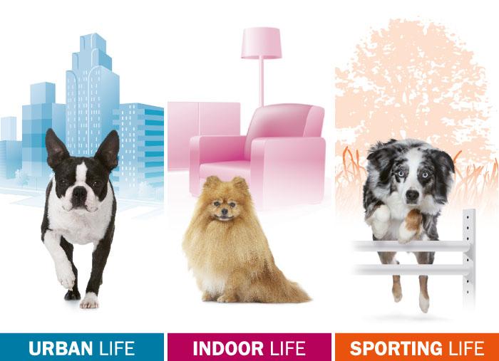 Royal Canin: la nuova gamma Lifestyle Health Nutrition