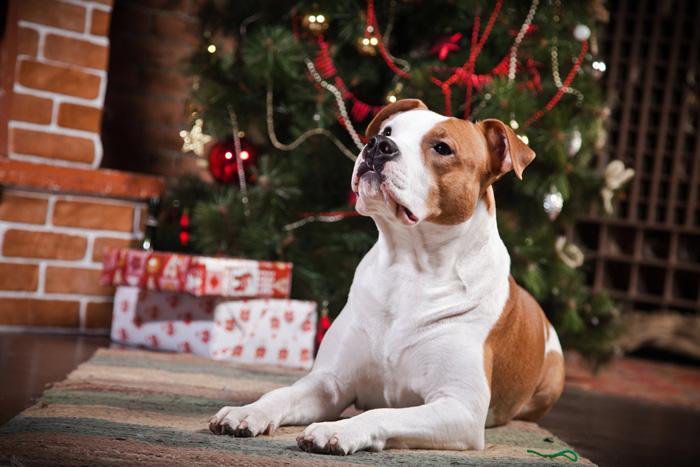 Una cane di Natale
