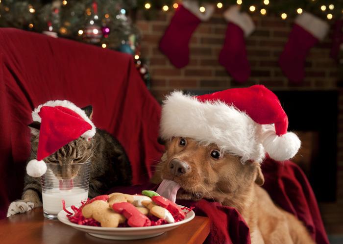 Ricette di Natale per cani e gatti