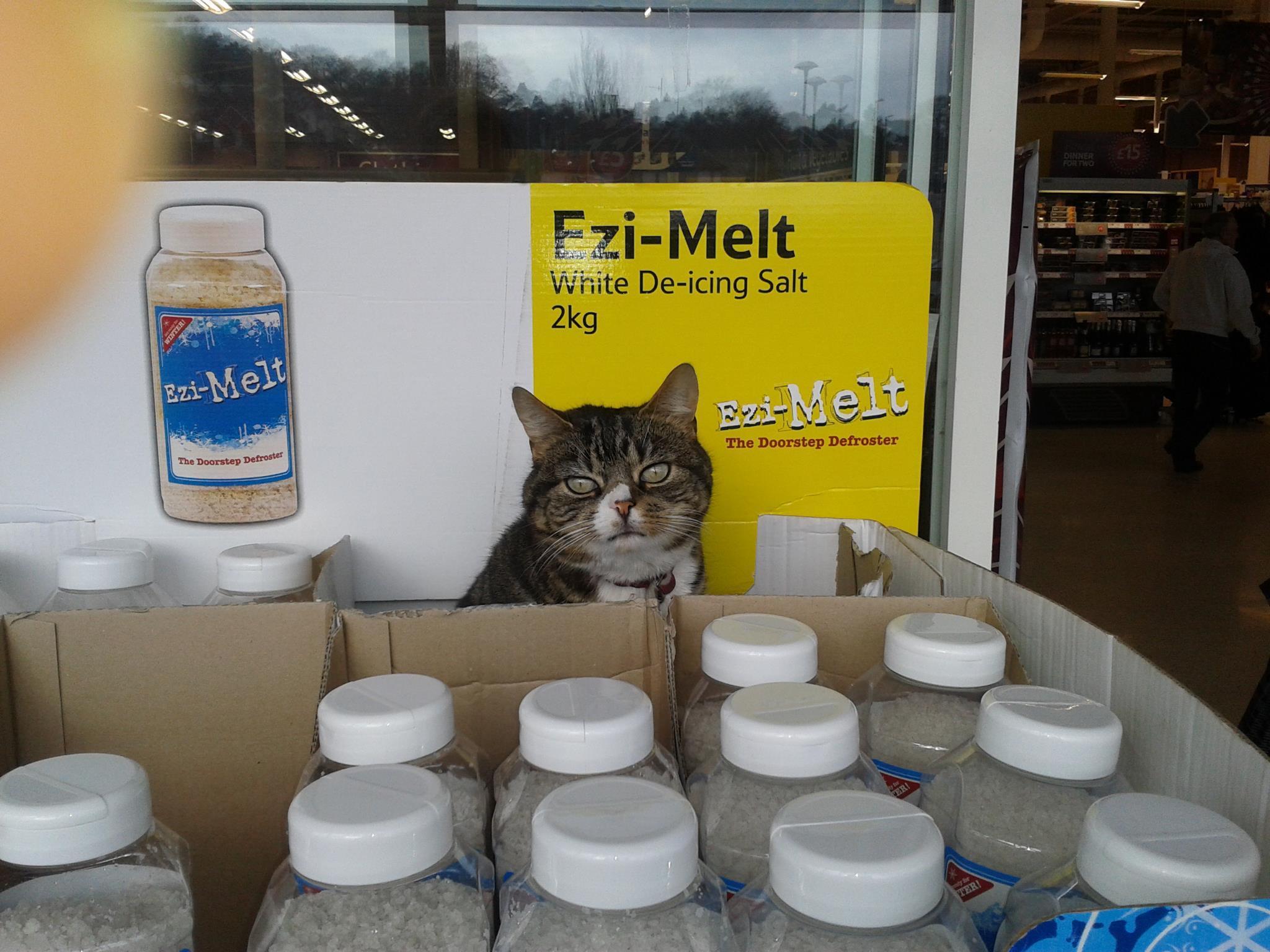 Mango, il gatto che vive in un supermercato