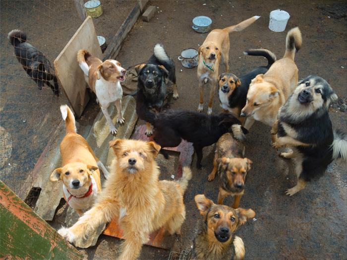Animal hoarding: quando non è amore