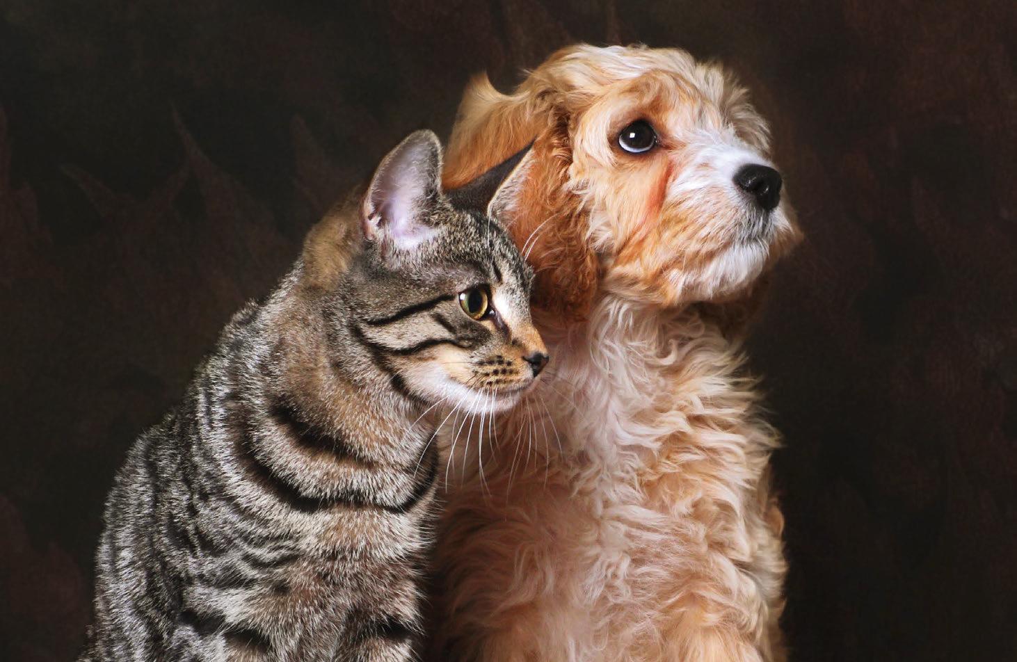 Dove e con chi lasciare cani e gatti per un breve periodo  Quattro Zampe