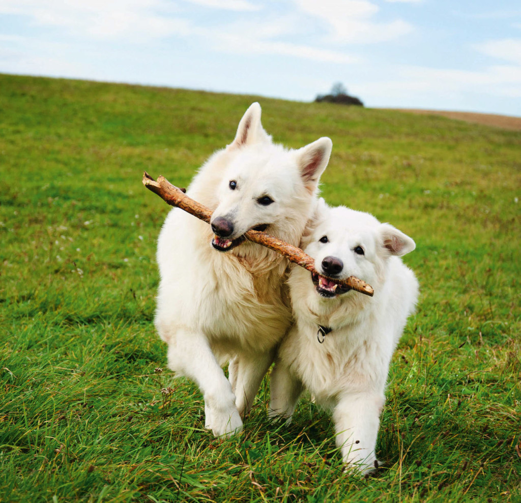 Cani in movimento