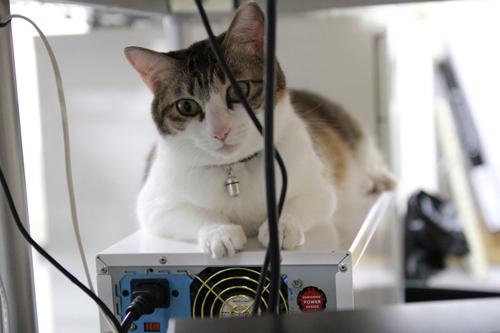 I gatti della Ferray Corporation di Tokyo