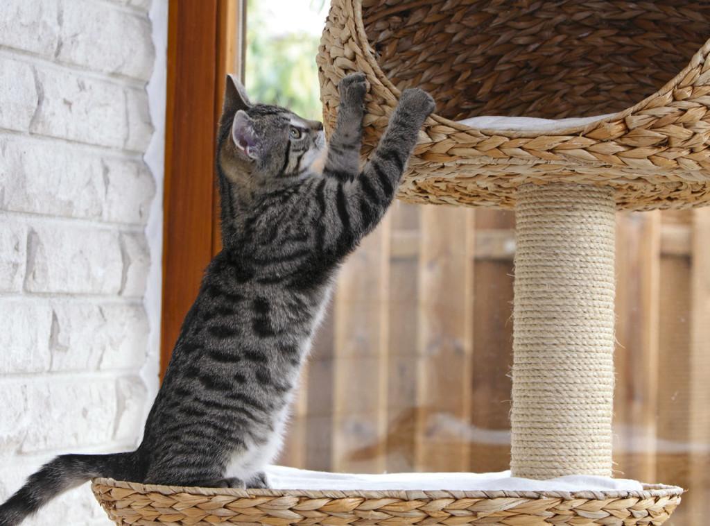 Un gatto e il suo tiragraffi