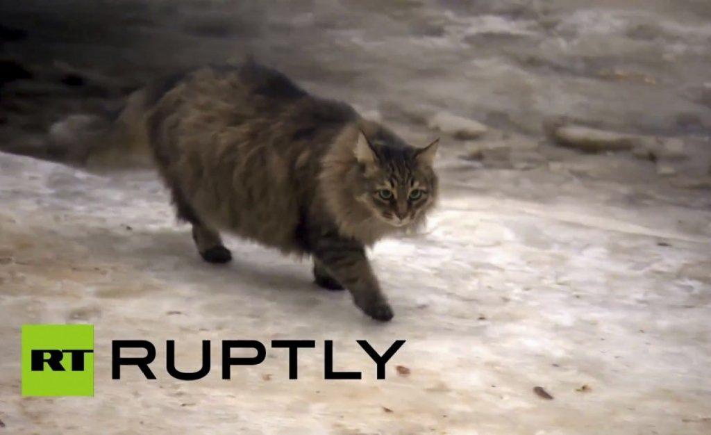 Masha, la gatta che ha salvato un bambino dal congelamento in Russia