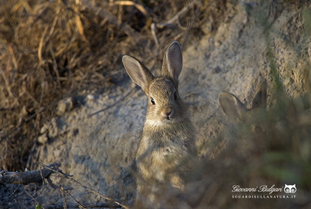 """Mostra """"Sguardi sulla Natura"""" a Orzinuovi il 7 e 8 febbraio"""