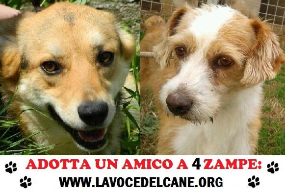 Associazione La Voce del Cane