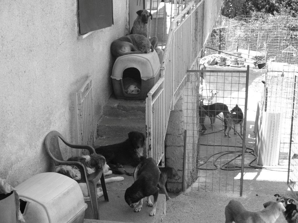 Animal Hoarding: statistiche e casi