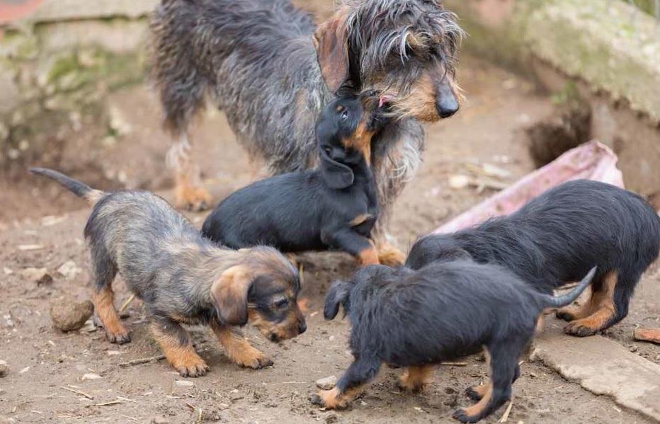 Animal Hoarding: quando sono troppi?